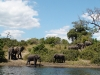 chobe-river-edge