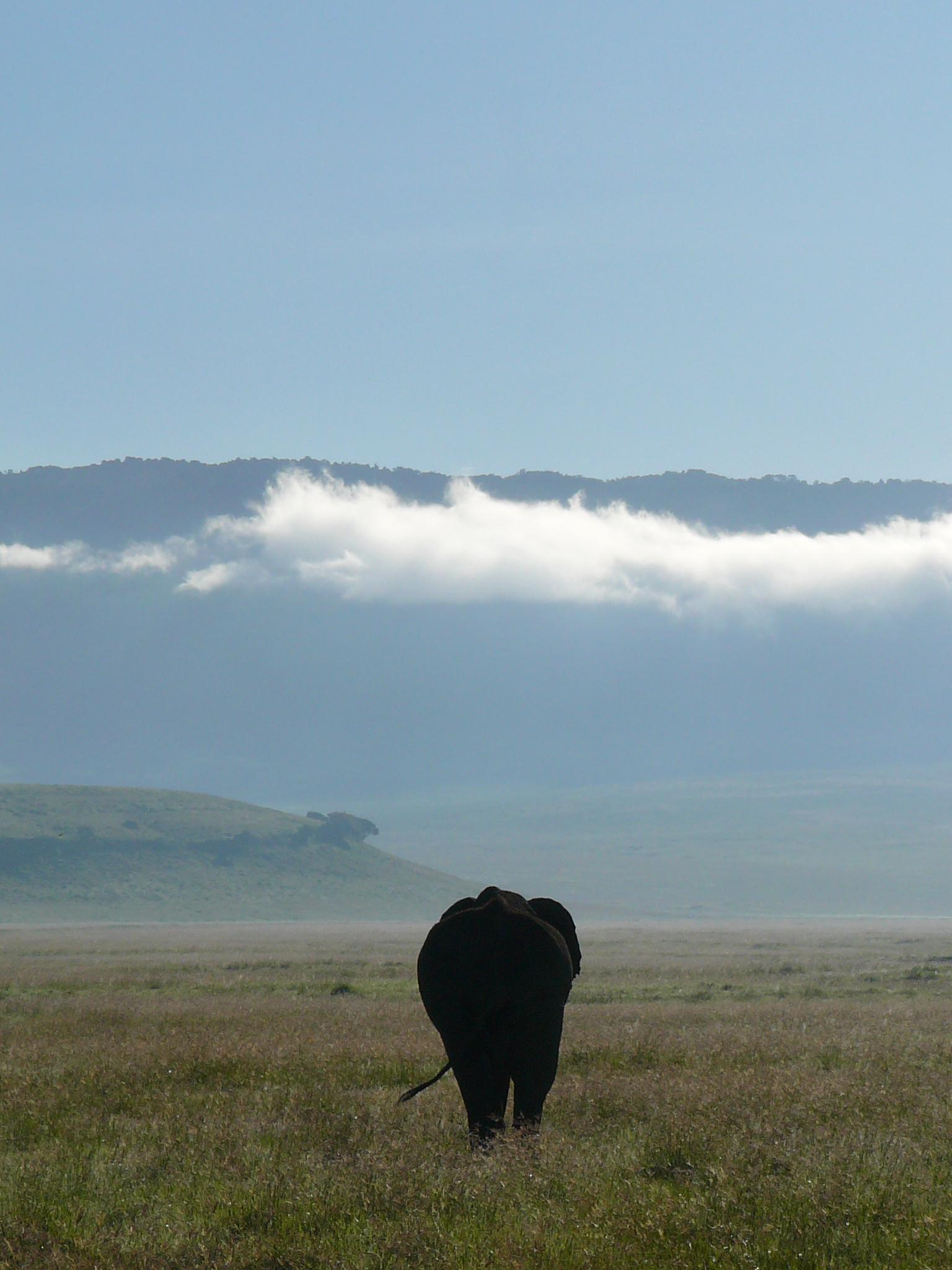 elephant-ngorongoro-crater-tanzania