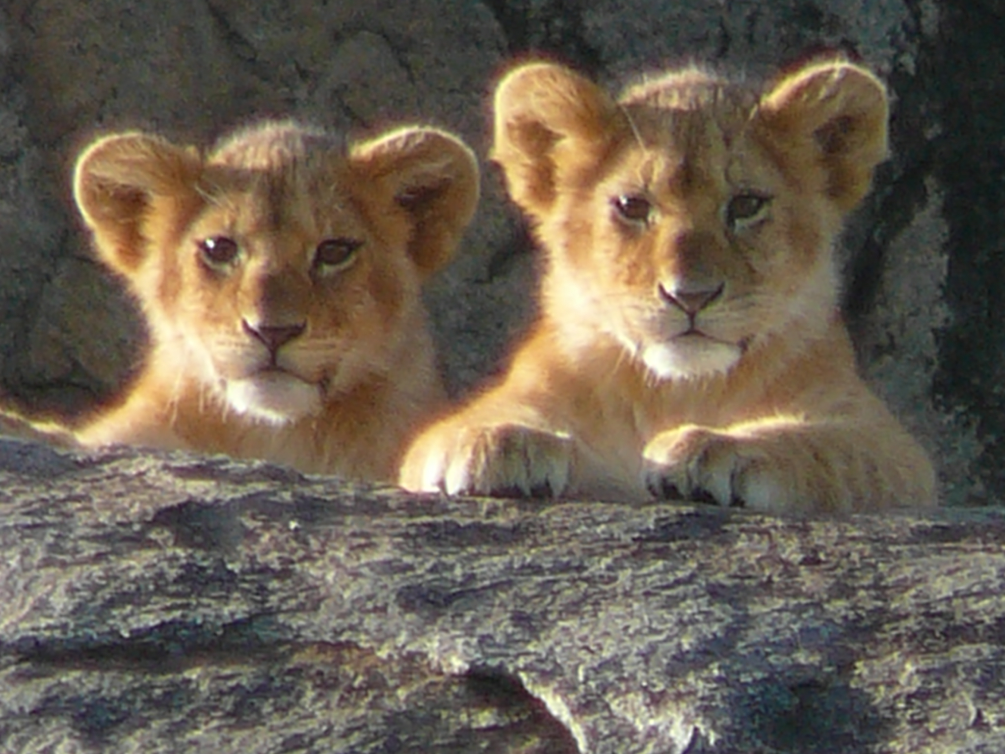 lion-cubs-at-kopje-serengeti