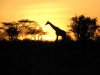 in-the-shadow-of-sunset-serengeti