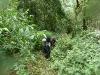 trekking-bwindi-impenetrable-forest-in-uganda