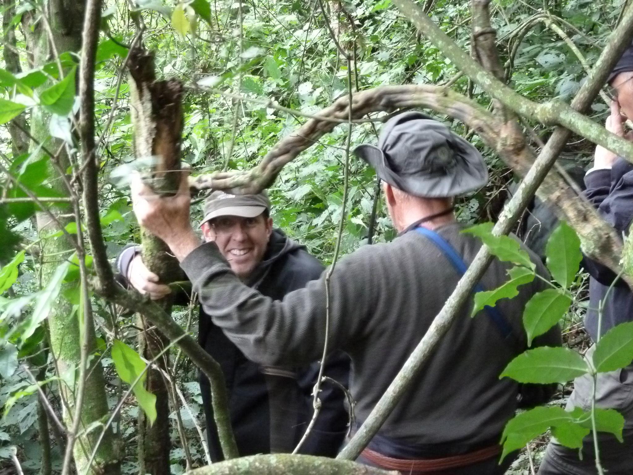 trekking-bwindi-impenetrable-forest-uganda