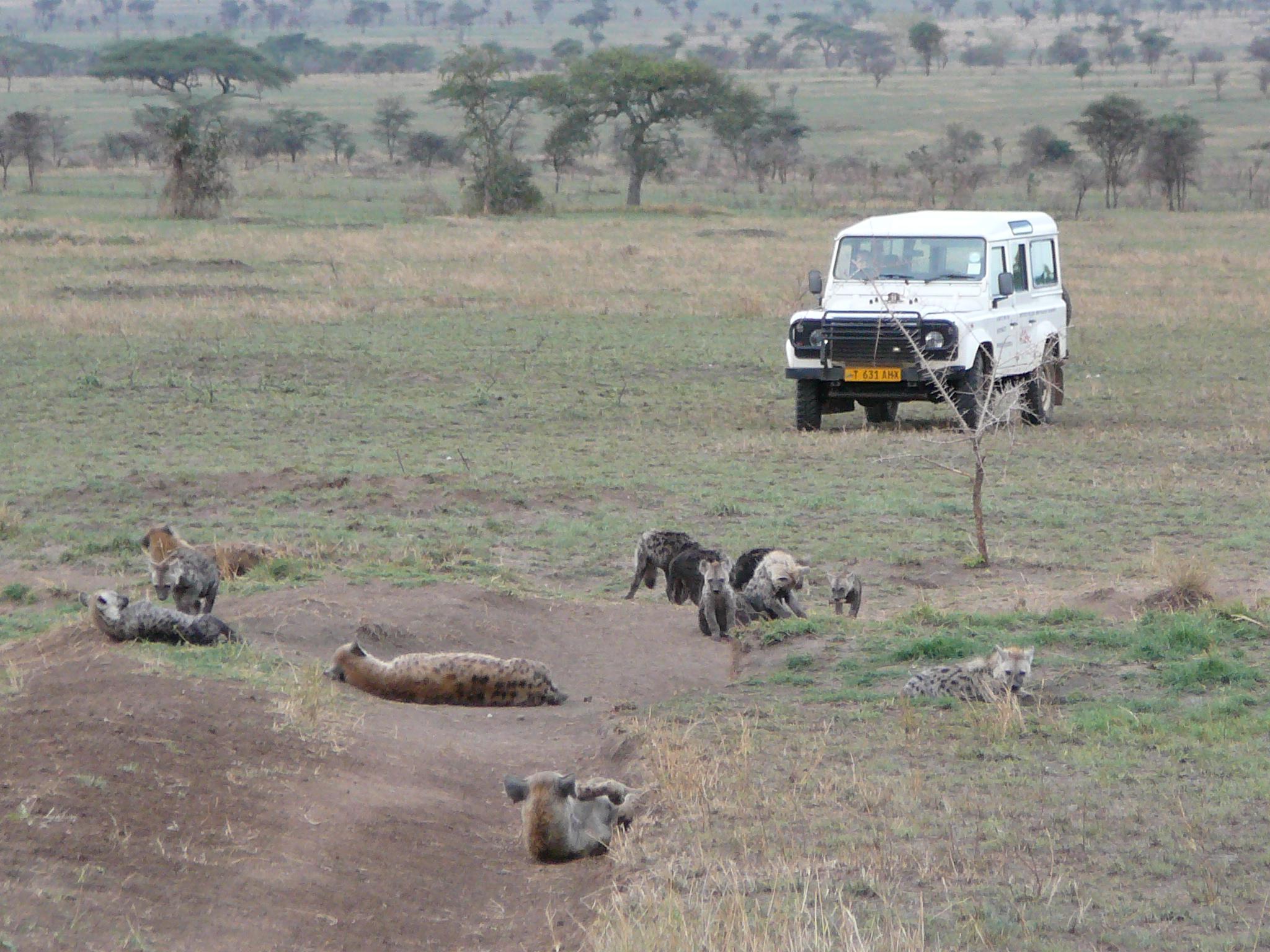 hyena-den