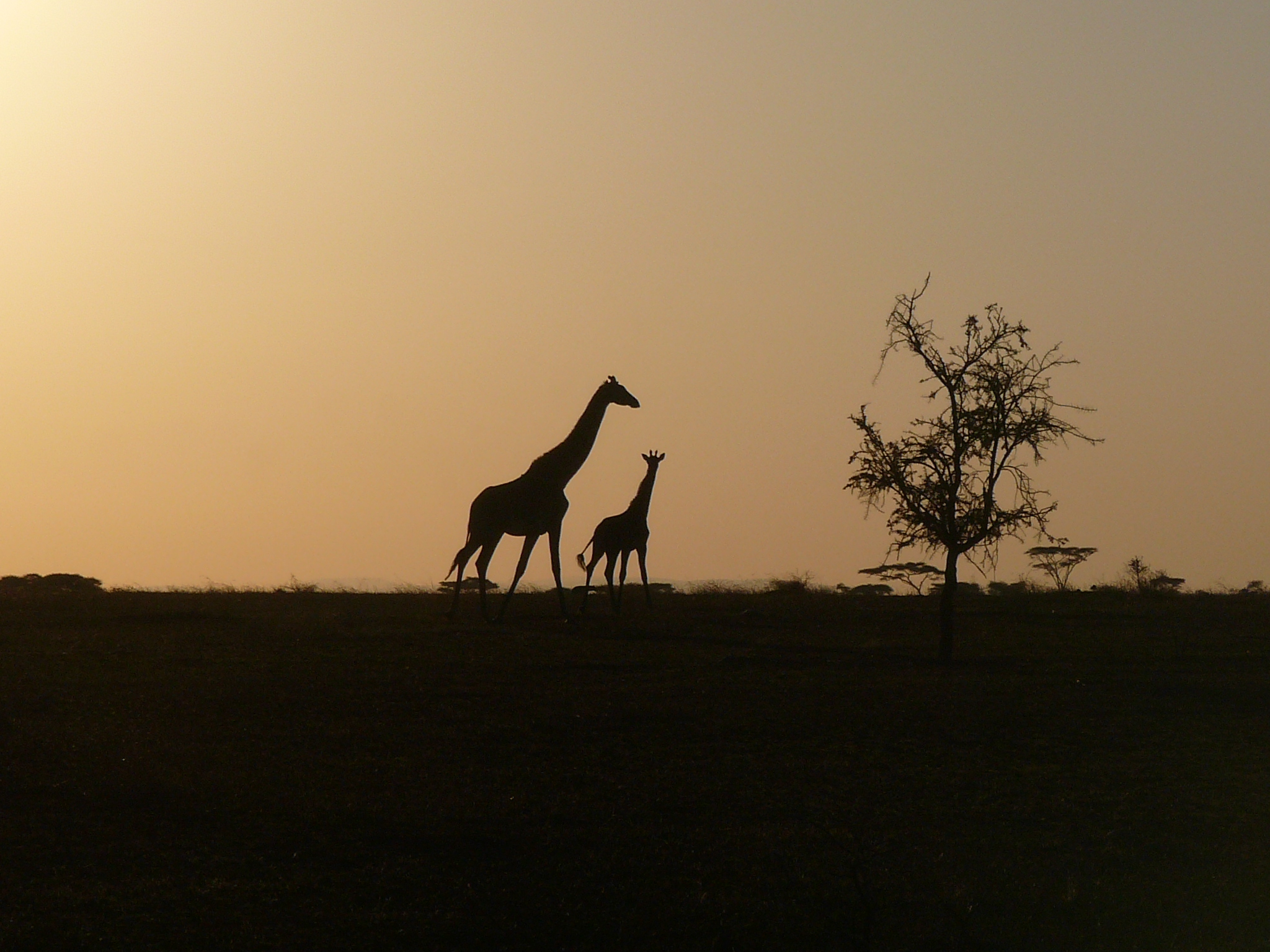 mama-and-baby-enjoying-sunset